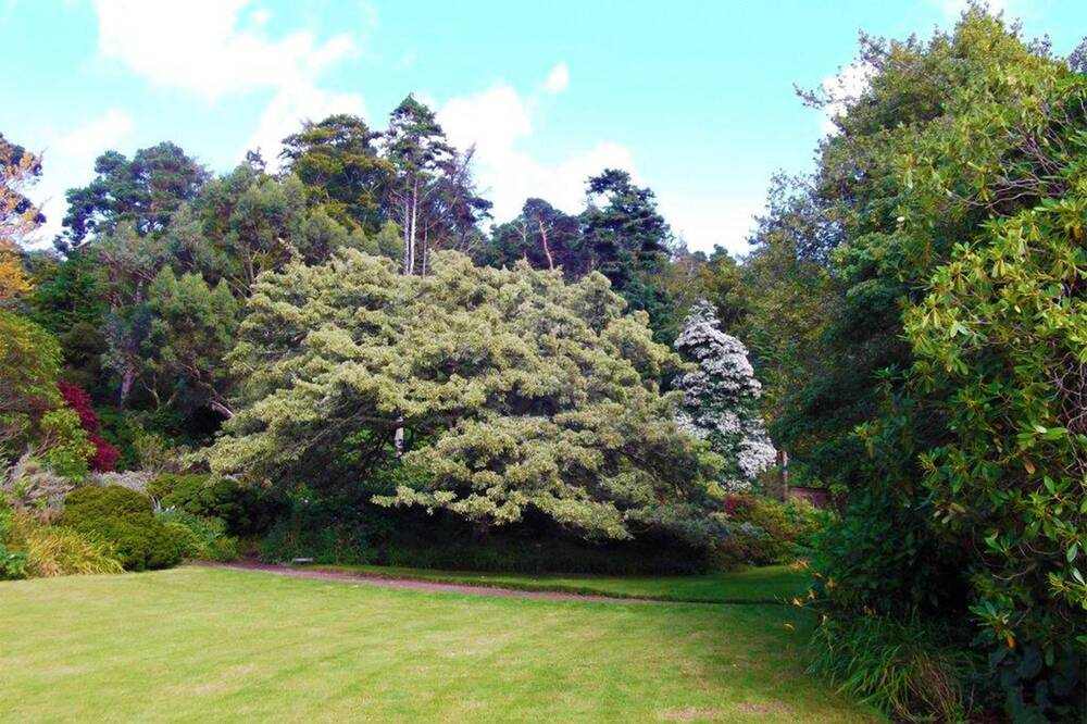 Inverewe Garden from the lawn, looking towards the woodland area and a large variety of trees.
