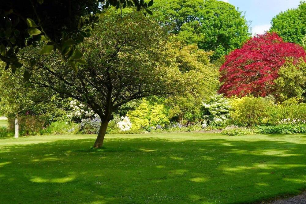 A small tree stands in the middle of a lush green lawn, with other trees and shrubs surrounding the lawn. One of the trees in the background has bright red leaves.