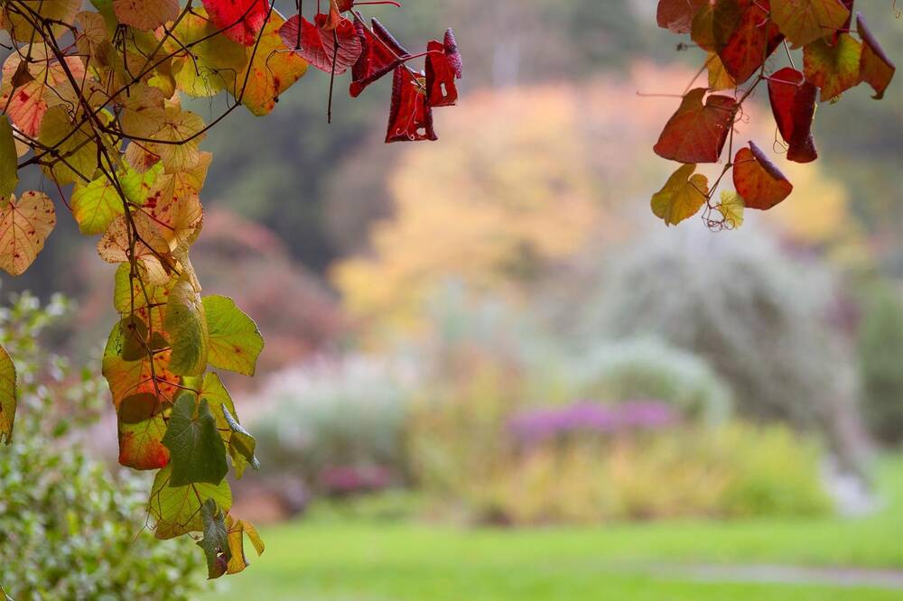 A view of Threave Garden, with the camera focused on the framing branches in the foreground. The leaves are red, orange and green.