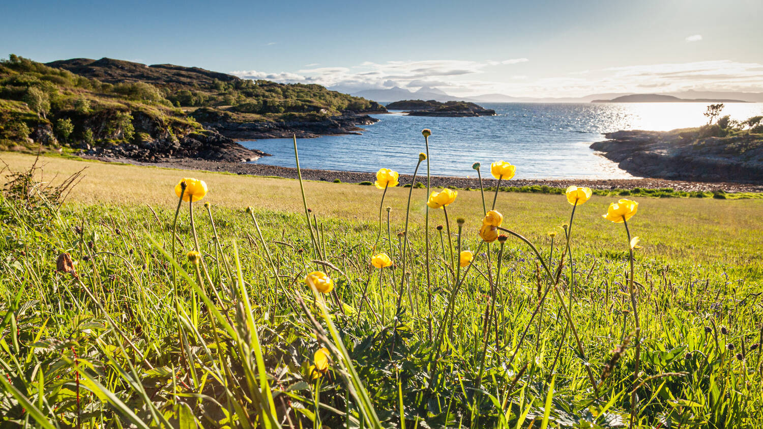 A meadow beside the sea on a sunny day, with the sun twinkling on the blue water. Tall yellow flowers grow in the foreground.