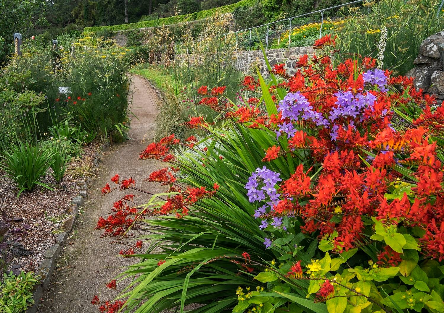 A view of a colourful flower border beside a gravel path in a terraced walled garden.