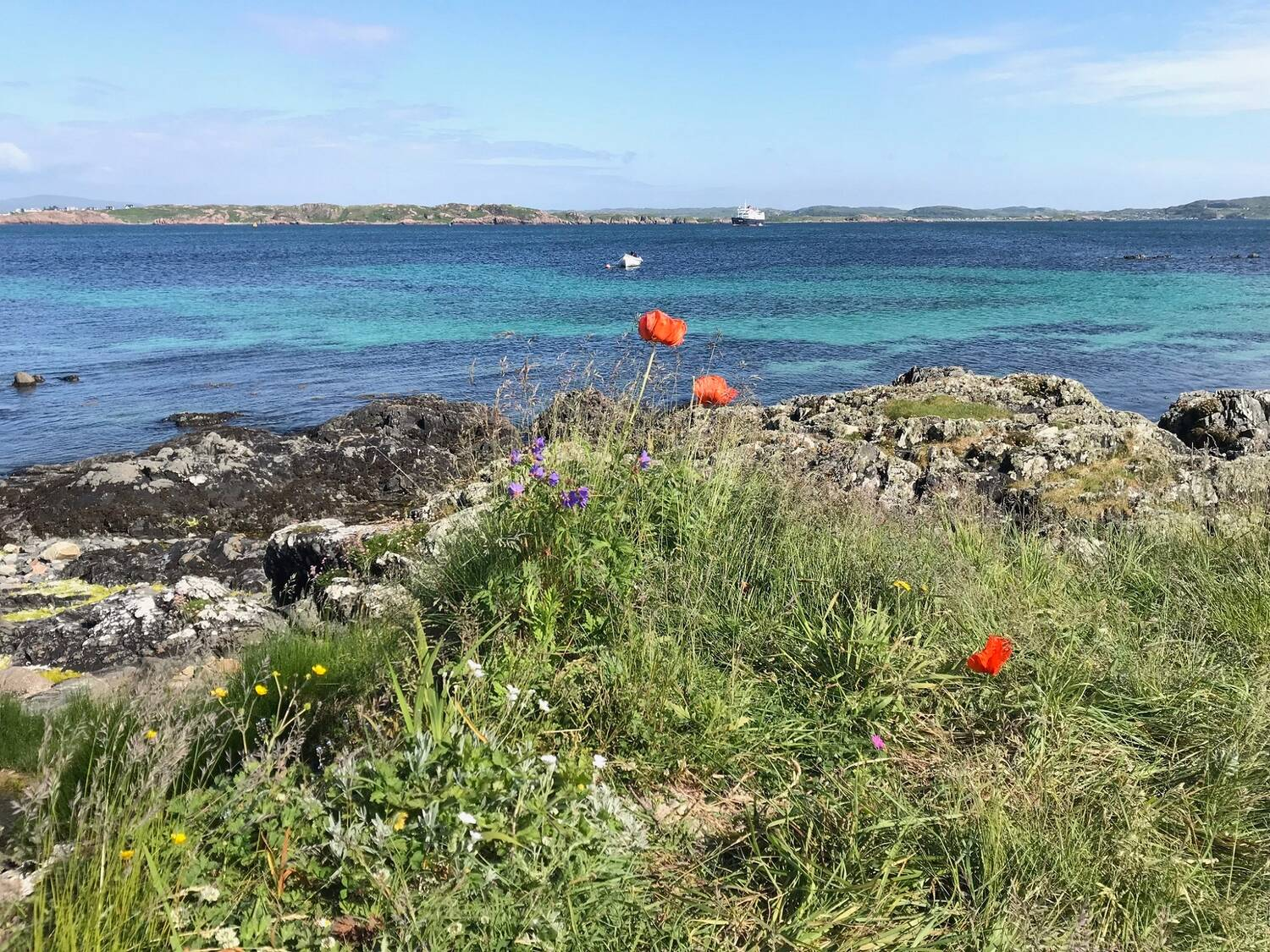 Poppies and other wildflowers grow on a rocky coastline, with a bright blue sea in the background. A ferry can be seen in the distance.
