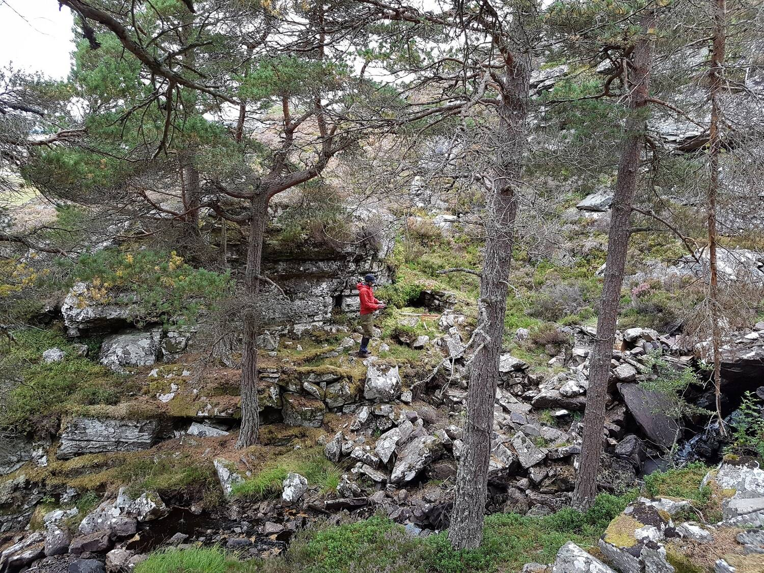 A man in wet weather gear stands in a rocky area beside a stream. Behind him are the almost covered stone remains of a walled structure. Tall pine trees grow in the area.