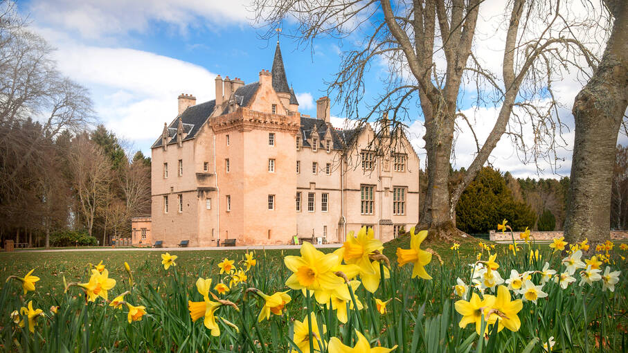 Daffodils in front of Brodie Castle in springtime