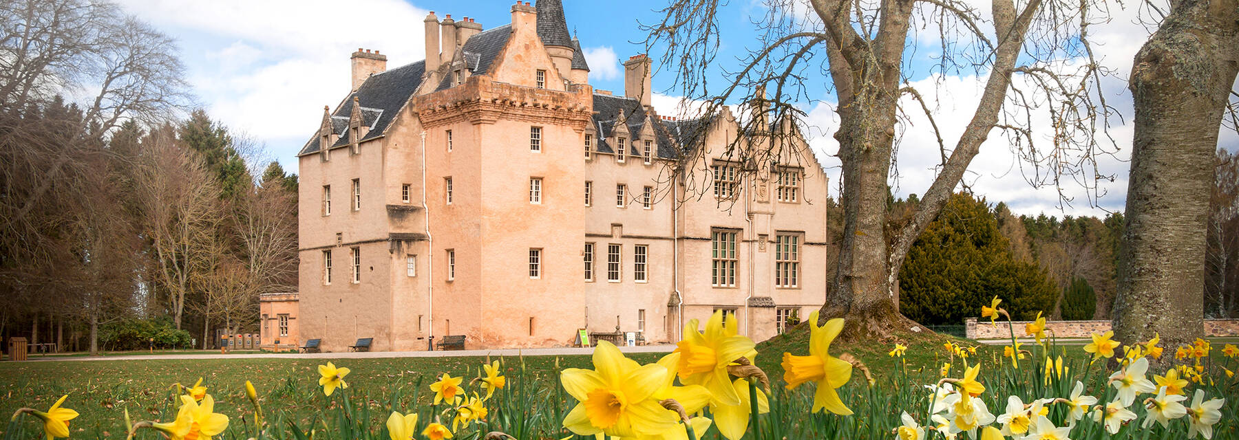Brodie Castle exterior among large deciduous trees and daffodils