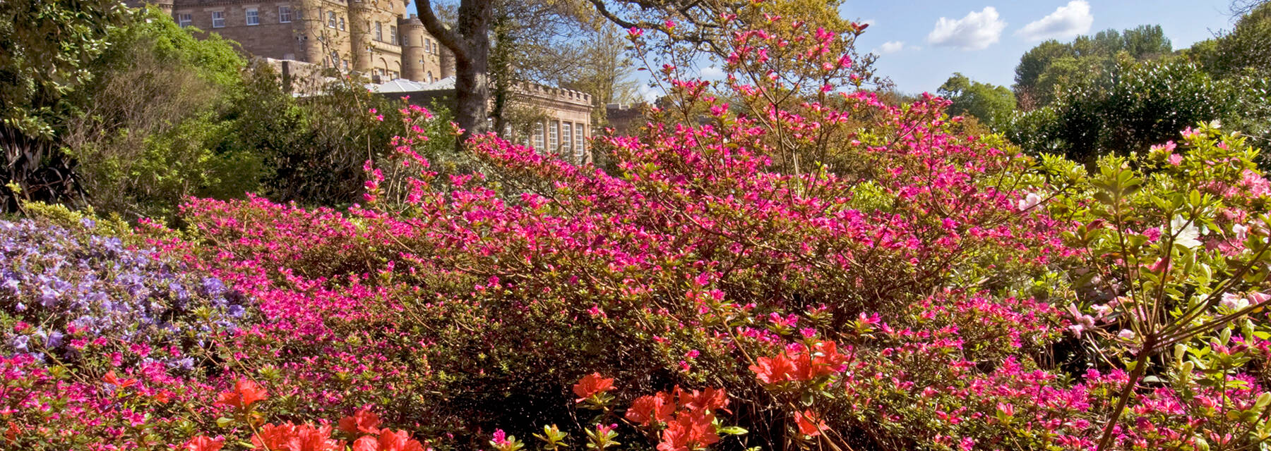 A bright and colourful display of flowers, with Culzean Castle seen in the background on a sunny day.