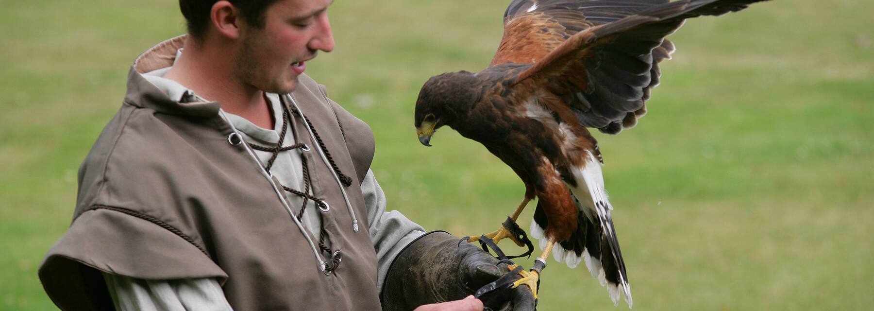 Falconry at Falkland Palace