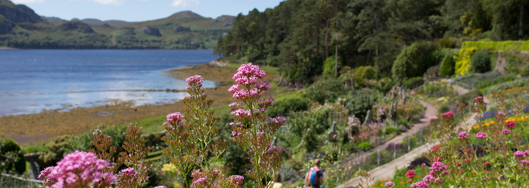 The walled garden at Inverewe. There are pink flowers in the foreground and Loch Ewe to the left of the shot with mountains in the background. Paths lead through the middle of the garden, and a man walks along one of them.