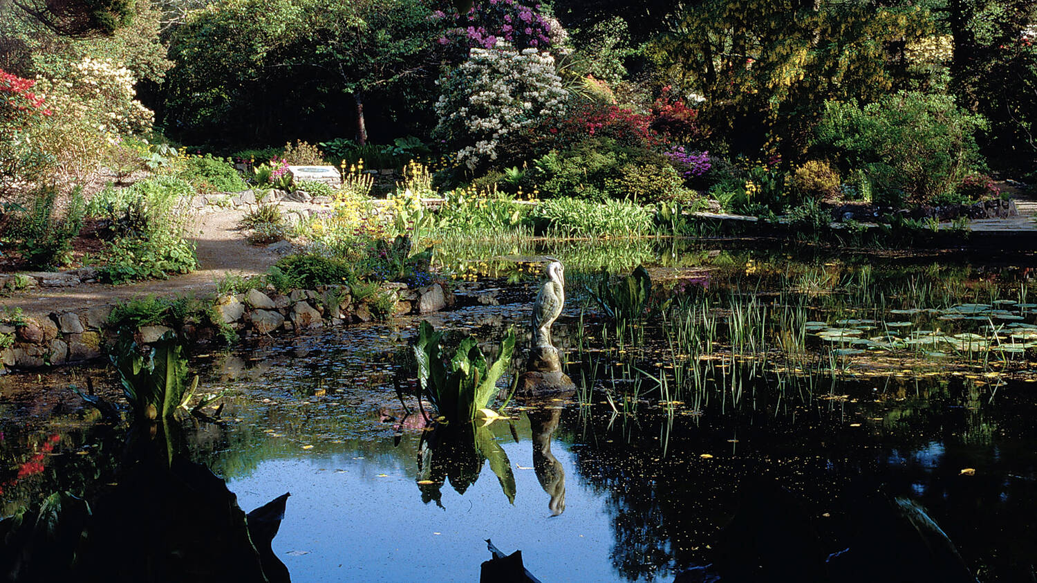 A pond in a garden, surrounded with colourful flower beds and rhododendrons in bloom. A statue of a heron stands in the middle of the pond.