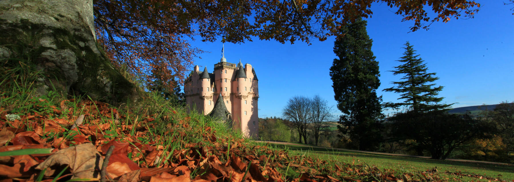 A view of Craigievar Castle in autumn on a sunny day. The image is taken from ground level at the foot of a large tree, with orange fallen leaves in the foreground. The pink tall storeys of the castle can be seen in the background, against a bright blue sky.