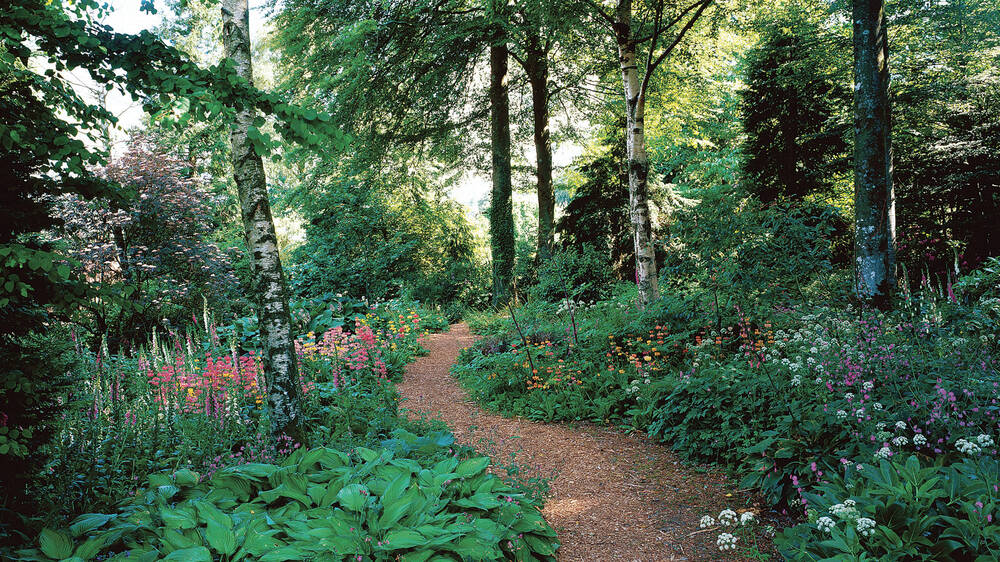 A path leads through the leafy woodland in Threave Garden, bordered by wildflowers and birch trees.