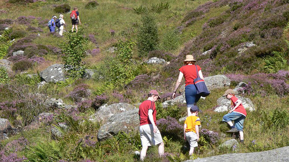 A family climb over boulders surrounded by heather on a nature trail.