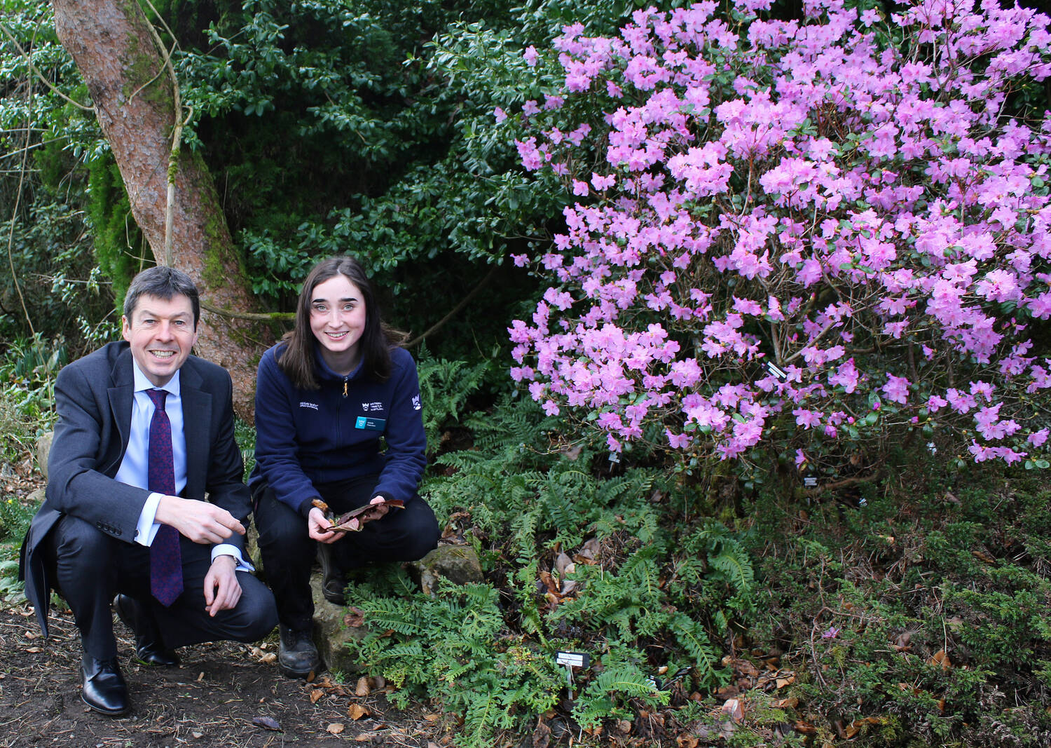 MSP Ken Macintosh and apprentice Eilidh Fletcher, crouching by a purple rhododendron in flower