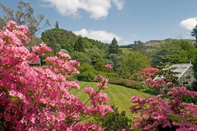Bright pink flowers stand in front of the Arduaine Garden landscape