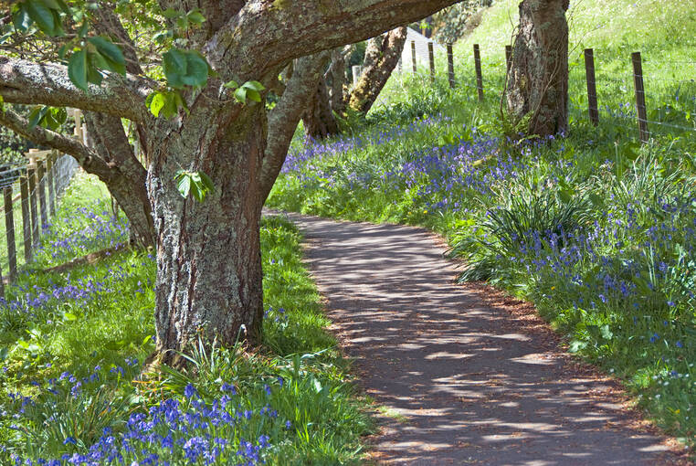 Bluebells can be seen flowering in April and May.