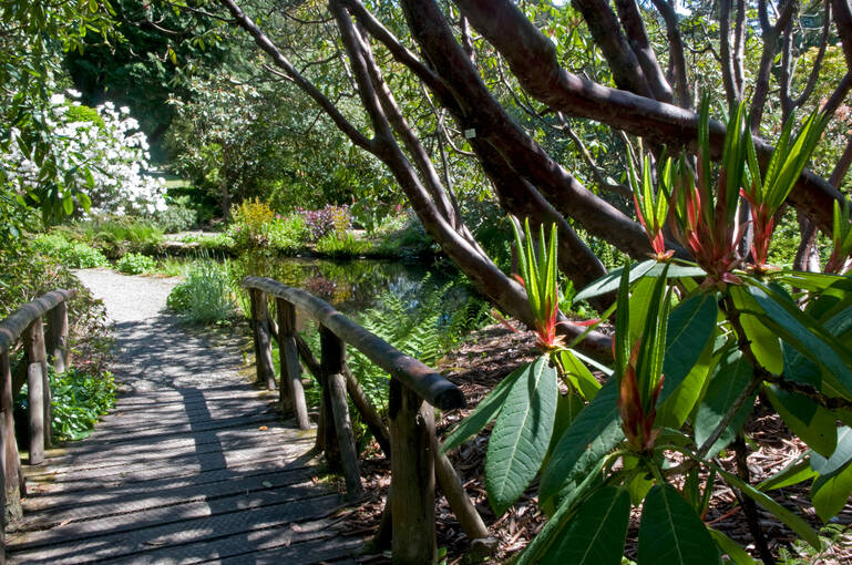 A bridge leads a way through Arduaine Garden