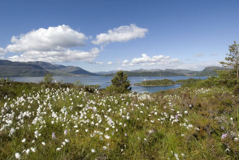 White flowers scattered across the grass; in the distance is Loch Alsh