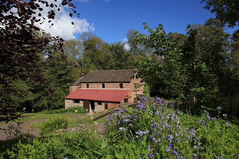Bluebells flowering in front of Barry Mill