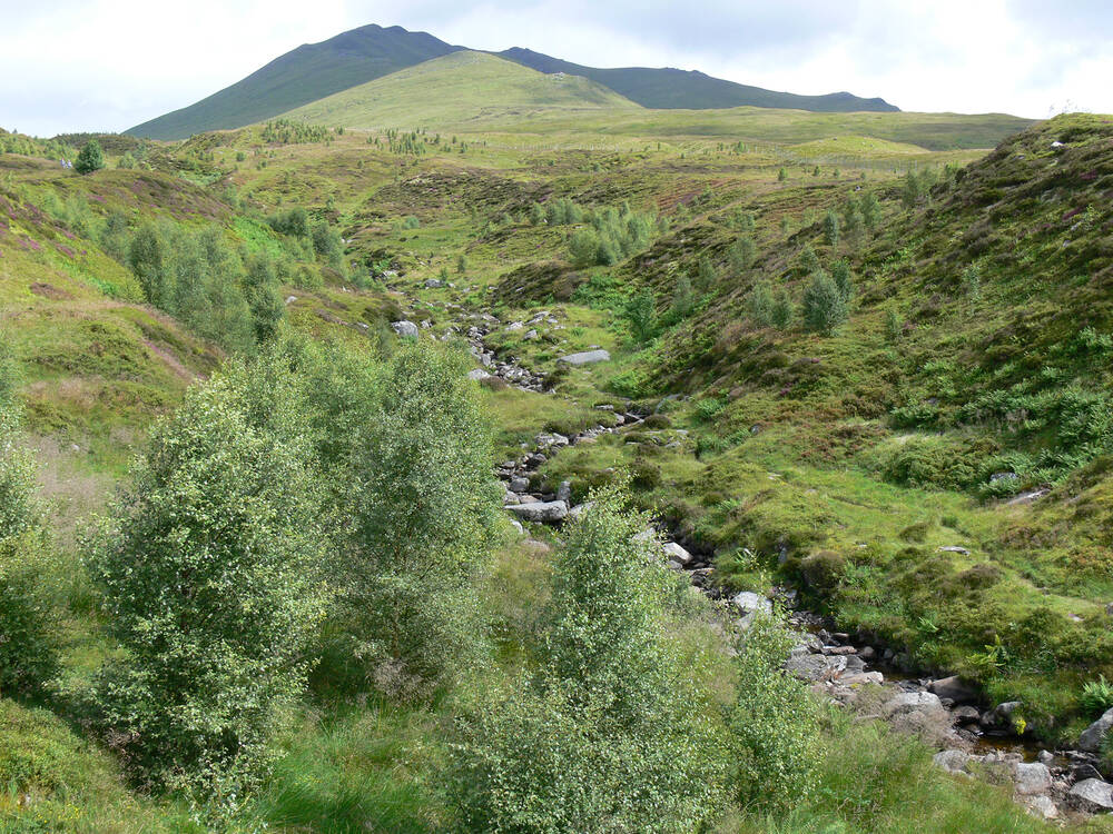 The restored green habitats of Beinn Ghlas mountain