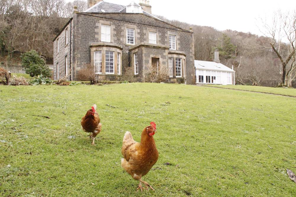 Canna House with chickens on the lawn