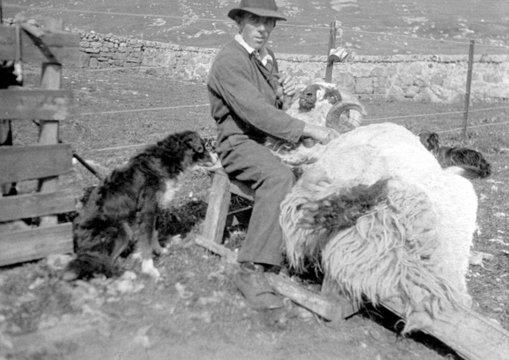 A black and white photograph of a man sitting, shearing a large sheep. A sheepdog sits beside him, watching carefully.