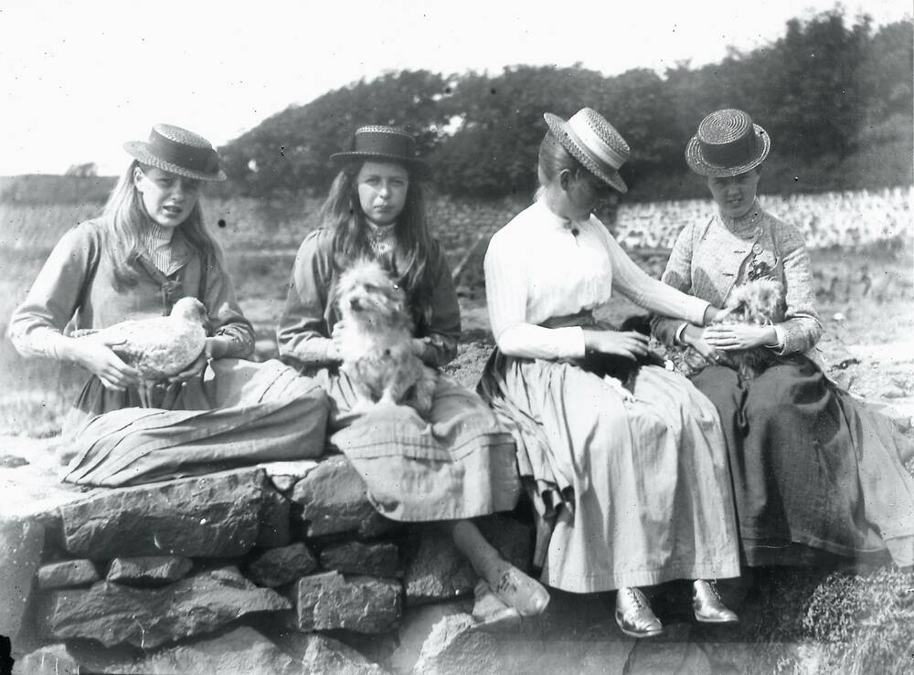 Four girls sit in a row on a wall, each wearing a straw hat and holding a pet: (from left to right) a young gull, a dog, a kitten and a smaller dog.