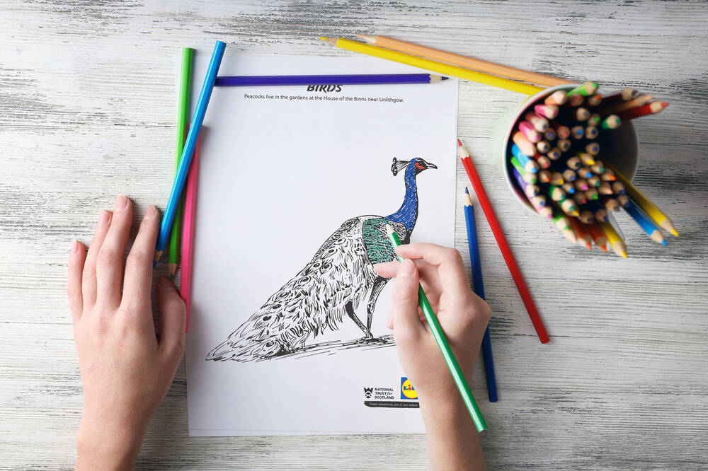 Child colouring in a peacock illustration