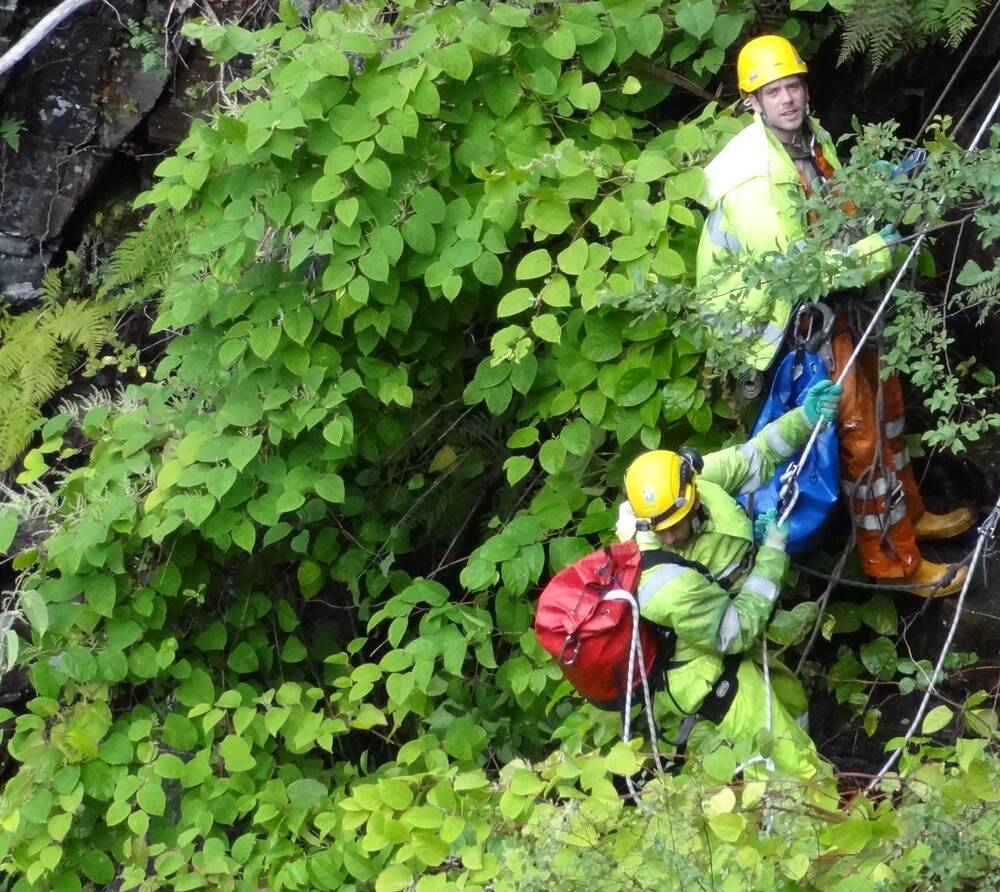 Conservation experts abseiled into Corrieshalloch Gorge to remove invasive species.