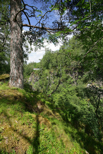 The viewing platform can be seen through the trees in Corrieshalloch Gorge