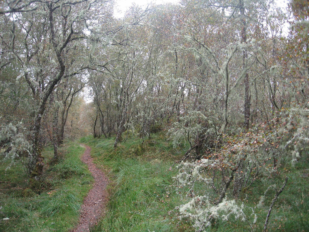 Walking through Coille Mhor, 'the great wood', at Balmacara