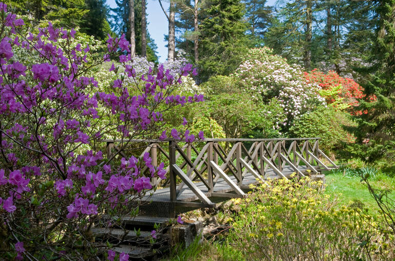 Purple flowers next to a wooden bridge in Crarae Garden