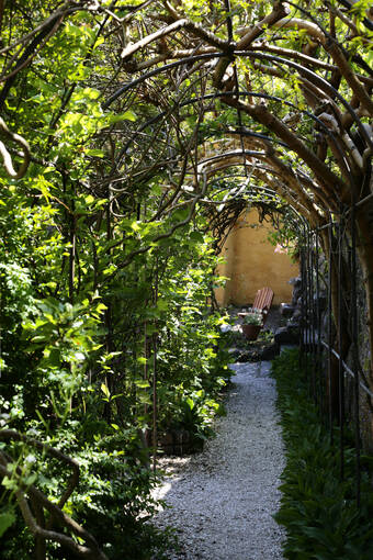A tunnel of vines in the garden at Culross