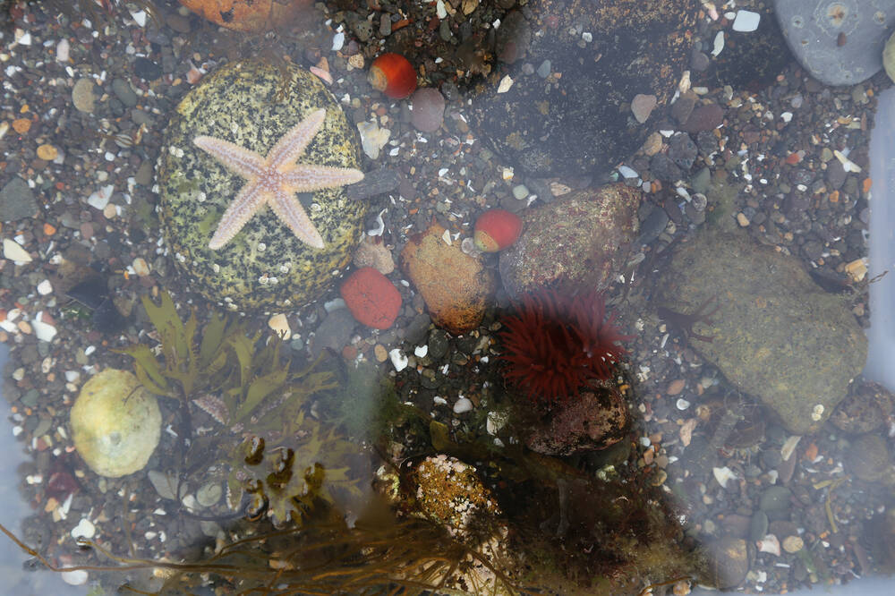 Looking down into a shallow rockpool with colourful pebbles and shells, and a starfish in the centre.
