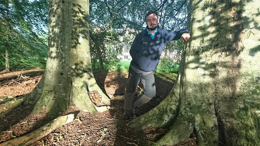 Head Gardener Ed Walling with Brodie's beech trees