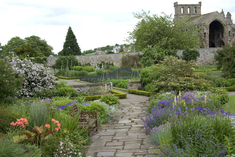 A view of Melrose Abbey from Harmony Garden. A stone path weaves through the garden, with colourful flowerbeds either side.