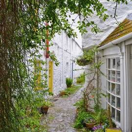 A narrow cobbled lane runs between a row of white stone house with colourful front doors. Potted plants sit beside the walls. A tree frames the photo on the left.
