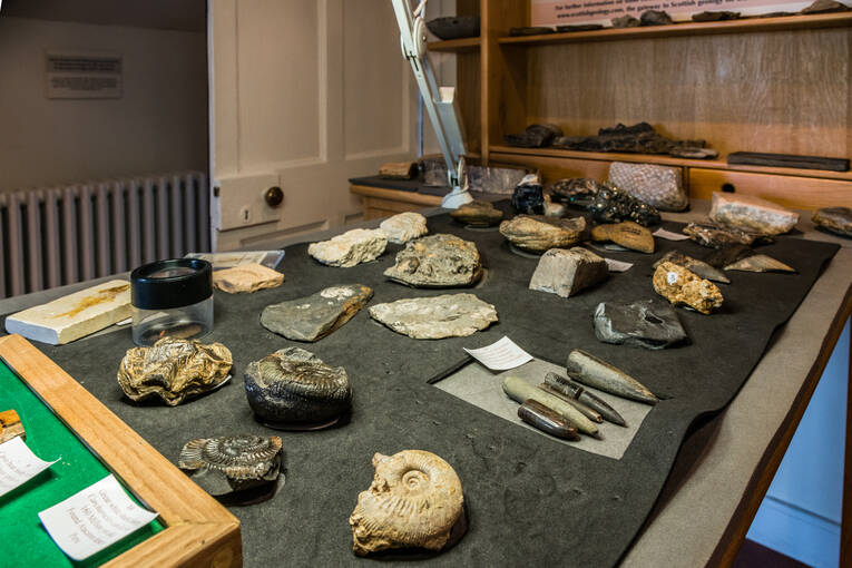 Fossils on display