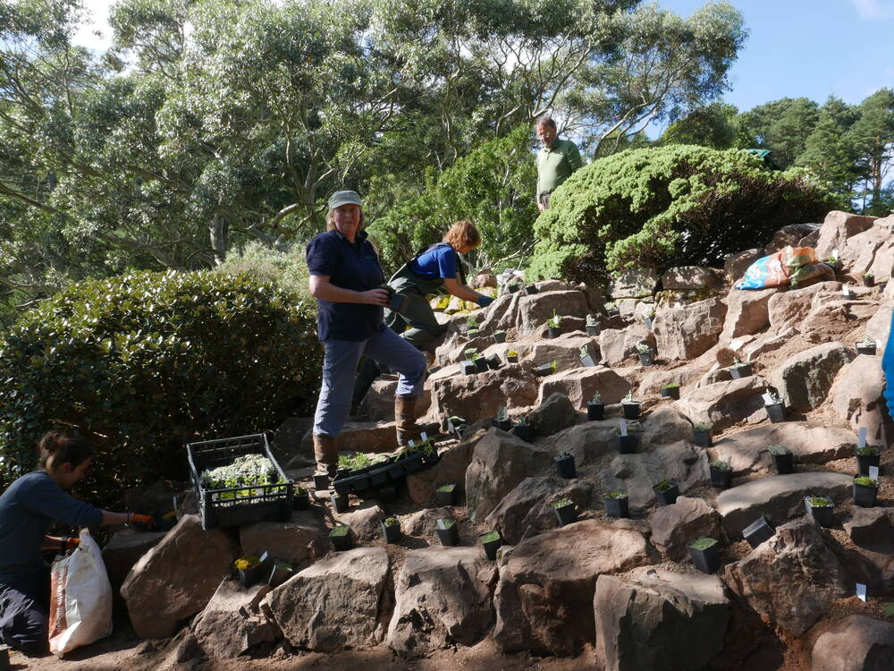 A group of people plant plants on a steep rocky terrace at Inverewe.