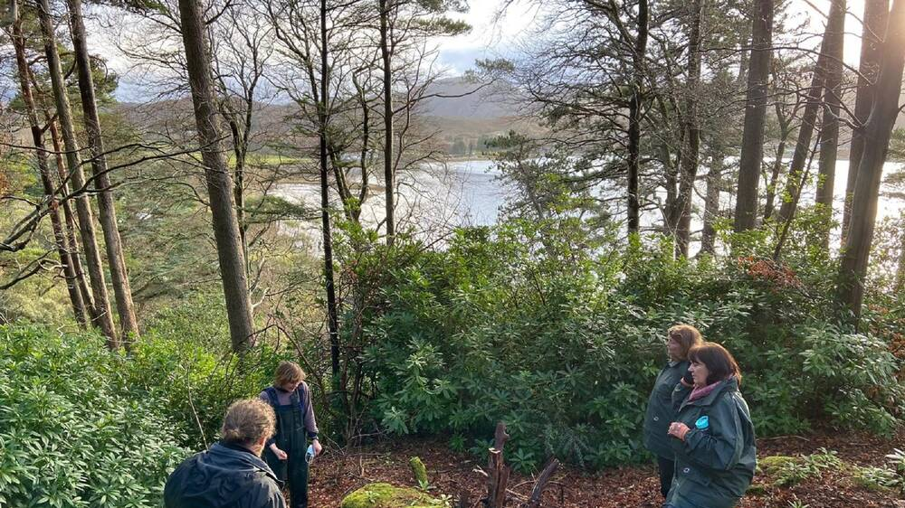 Four people stand in a woodland clearing, around a mossy stump. Rhododendron bushes grow around them. The trees are mostly Scots pine, and the loch can be seen through the trees in the distance.
