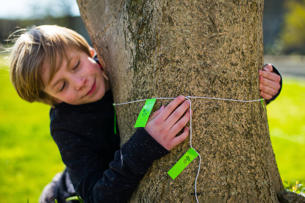 A young boy measures the circumference of a tree