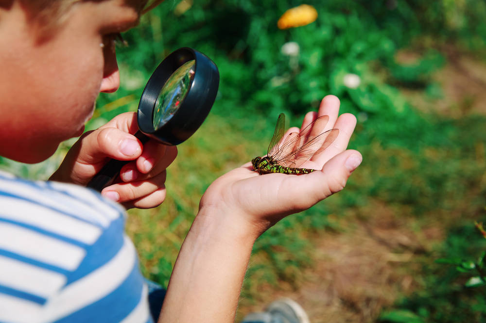 A child holding a dragonfly looks at it through a magnifying glass