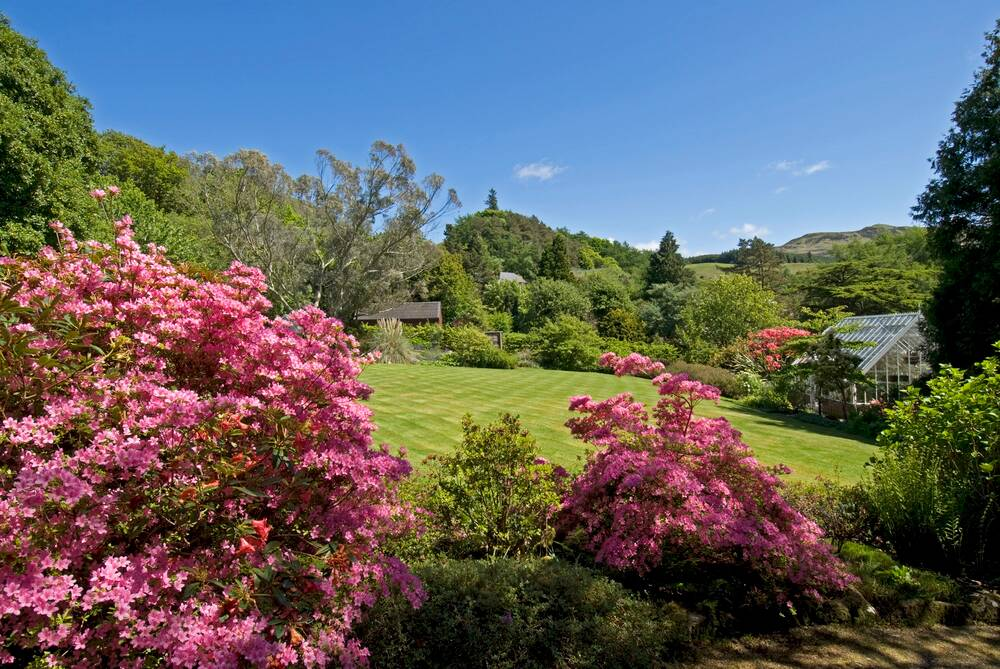 A view of the manicured lawn at Arduaine Garden, surrounded by pink flowering rhododendrons and lush green shrubs. A small greenhouse stands to the right of the image.