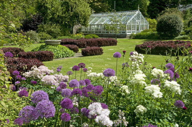Purple alliums and white flowers stand in front of Malleny Garden, with the glasshouse in the background.