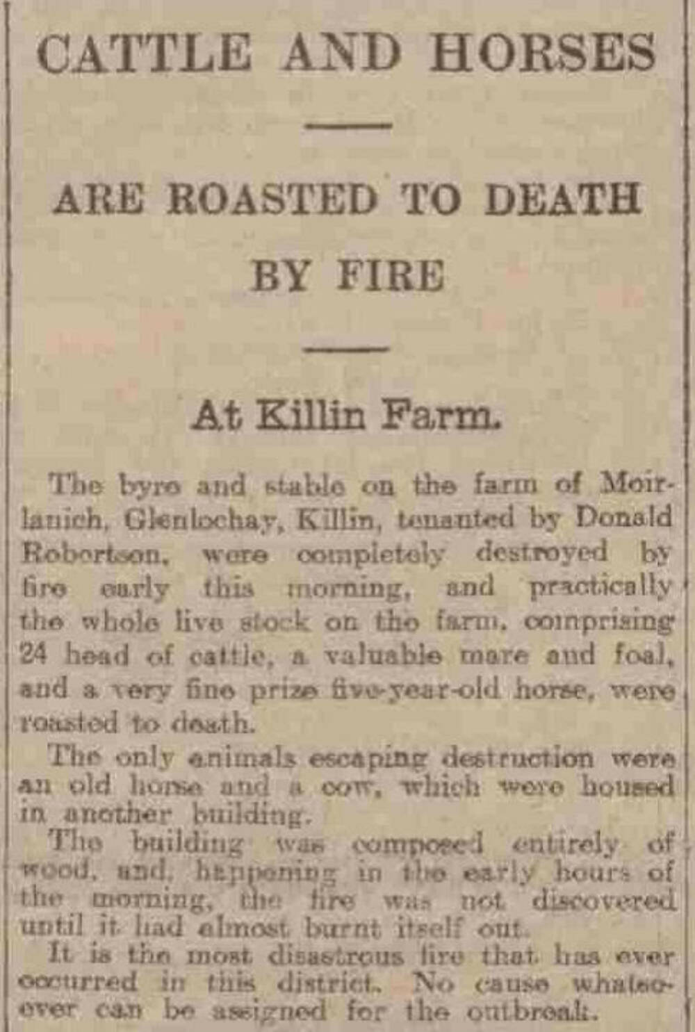 A report from the Evening Telegraph and Post, 18 May 1910. It describes the fire in the byre and stable at Moirlanich when almost all of the animals were 'roasted to death'.