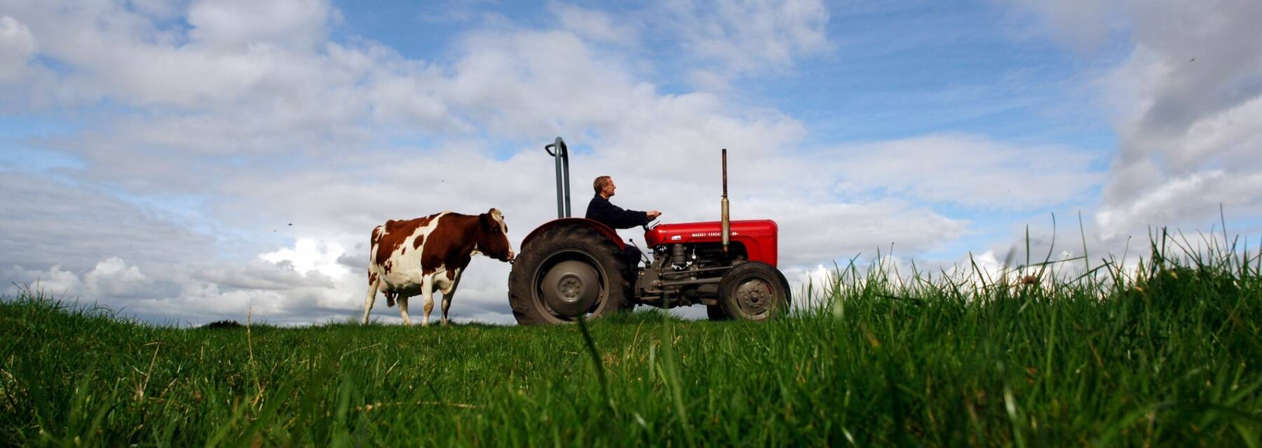 A cow and tractor in a green field.