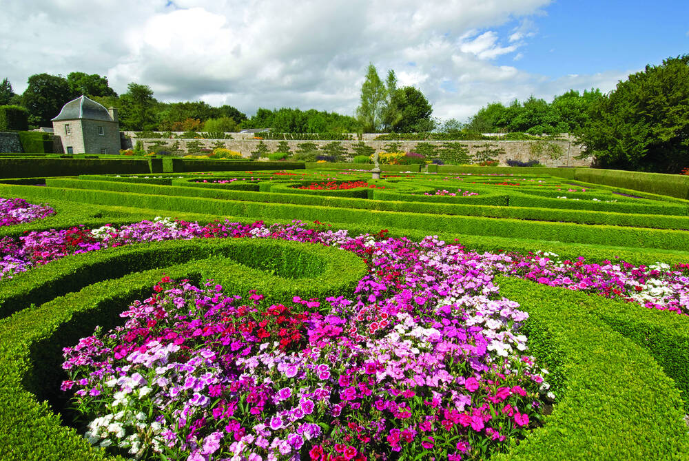 Elaborate clipped box hedging displayed across Pitmedden Garden. In the foreground, a mixture of pink, purple and white bedding plants fill a swirl of hedging.