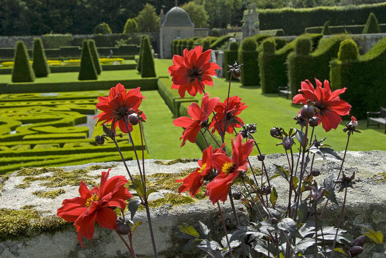 Red flowers overlooking the parterre of Pitmedden Garden