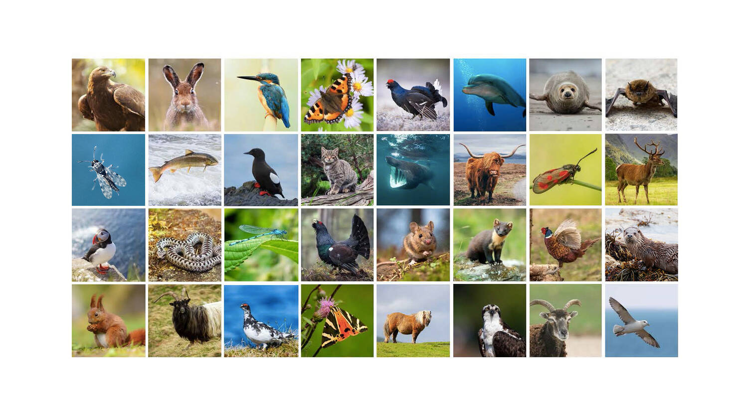 A grid of 32 colour photographs of the Scottish animals that will feature in the world cup.