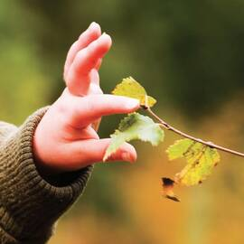 Child's hand gently touching a leaf