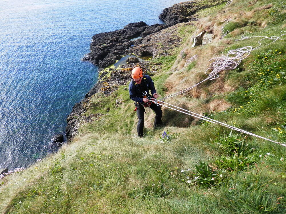 A surveyor, with the aid of ropes, undertakes a proper count of the puffin colony for the first time.
